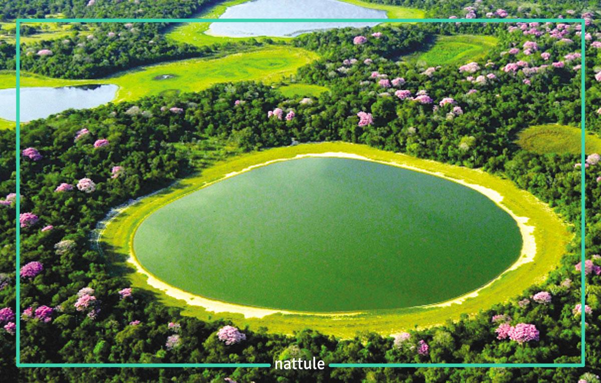 Día 5: Amazonas - Manaus - Cuibá